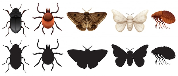 Conjunto de insetos e silhuetas Vetor grátis