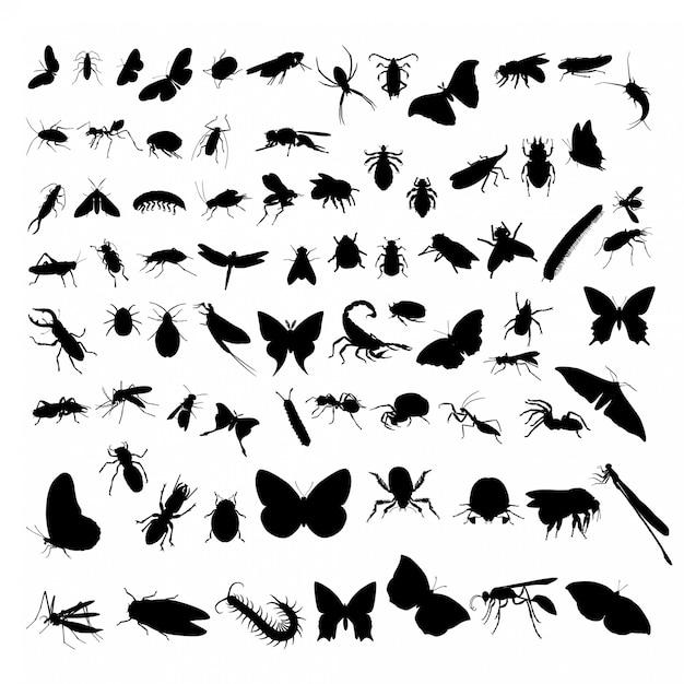 Conjunto de insetos Vetor Premium