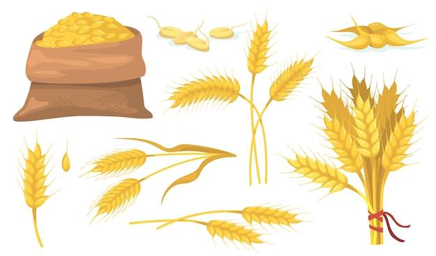 Conjunto de item plano, espigas e grãos de trigo maduro amarelo. Vetor grátis