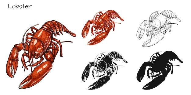 Conjunto de lagosta Vetor Premium
