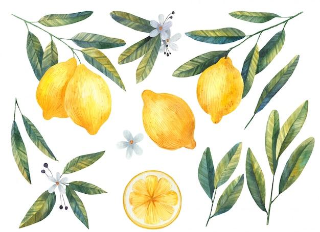 Conjunto de limões com folhas e flores em aquarela ilustração em fundo branco Vetor Premium