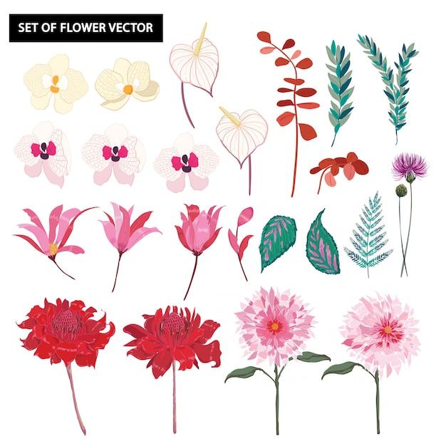 Conjunto de lindas flores de orquídea botânica Vetor Premium