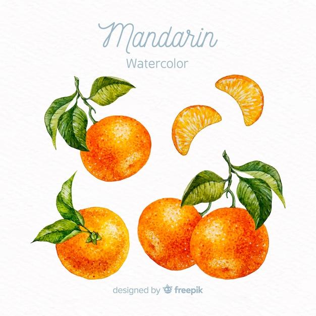 Conjunto de mandarim em aquarela Vetor grátis