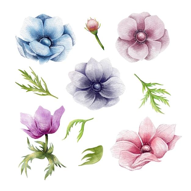 Conjunto de mão desenhada de flores de anêmona Vetor Premium