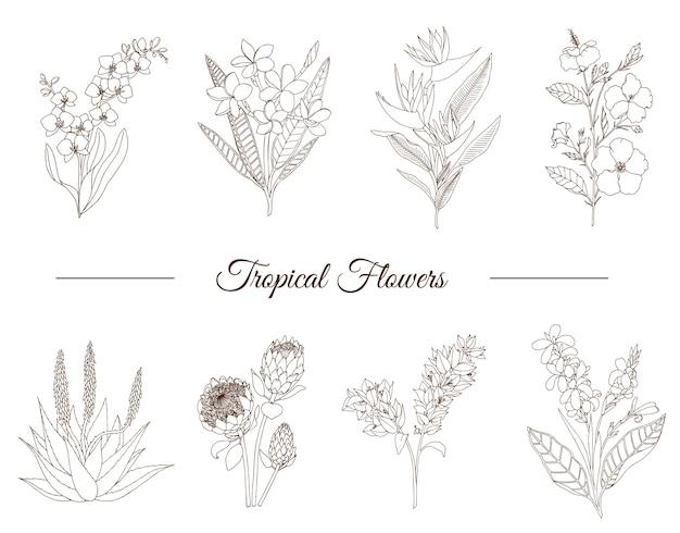 Conjunto de mão desenhada de flores tropicais Vetor Premium