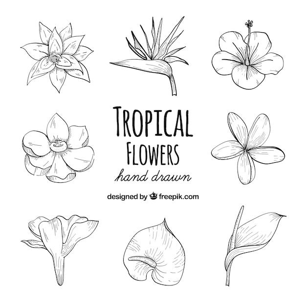 Conjunto de mão desenhada de flores tropicais Vetor grátis