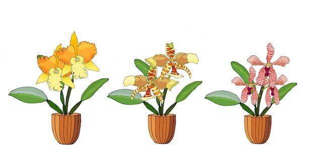Conjunto de mão desenhada de orquídeas em vasos de flores. Vetor Premium