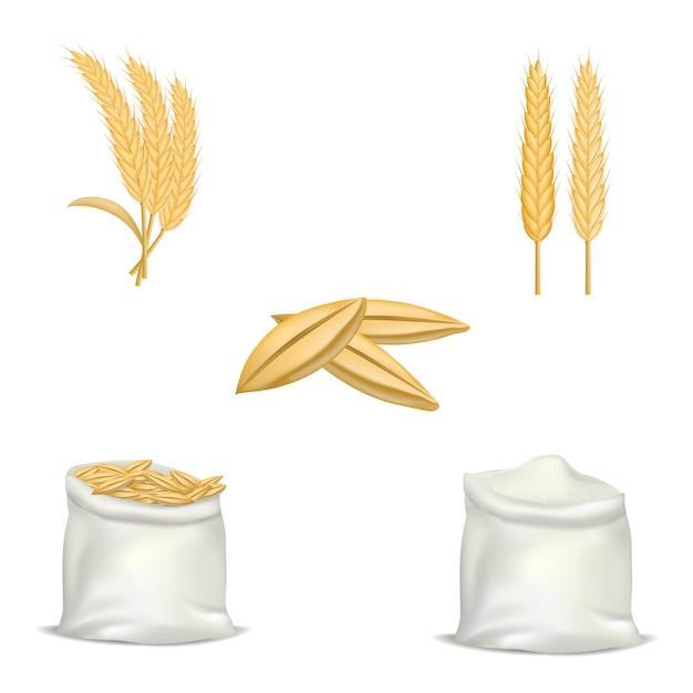 Conjunto de maquete de trigo de cevada. ilustração realista de 5 modelos de lúpulo de trigo de cevada para web Vetor Premium