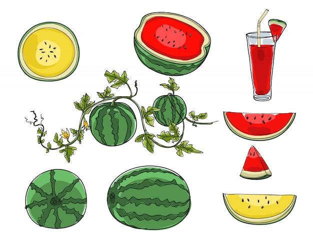 Conjunto de melancia de mão desenhada bonito arte ilustração vector Vetor Premium