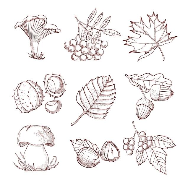 Conjunto de outono de mão desenhada Vetor grátis