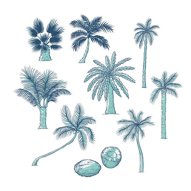 Conjunto de palmeiras. diferentes tipos de árvores tropicais e coqueiros. ilustração de esboço de contorno Vetor Premium
