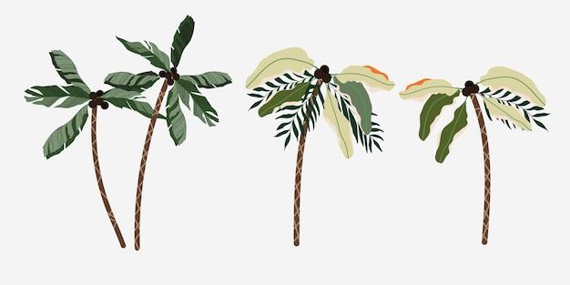 Conjunto de palmeiras isoladas. Vetor Premium