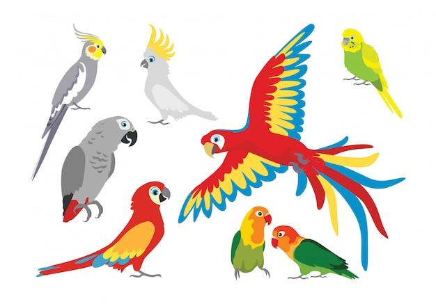 Conjunto de papagaios de desenhos animados. Vetor Premium