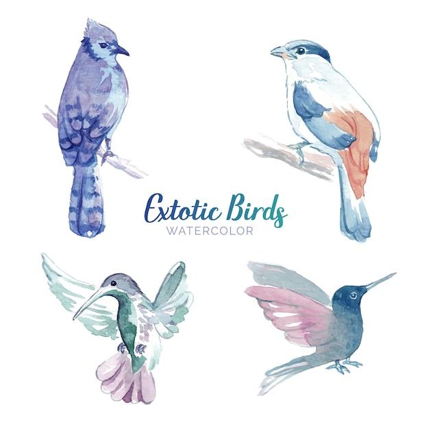 Conjunto de pássaros em aquarela Vetor grátis