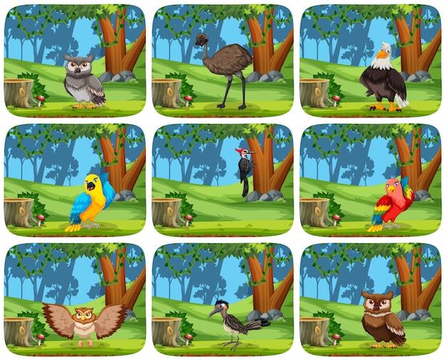 Conjunto de pássaros em cenas de madeira Vetor grátis