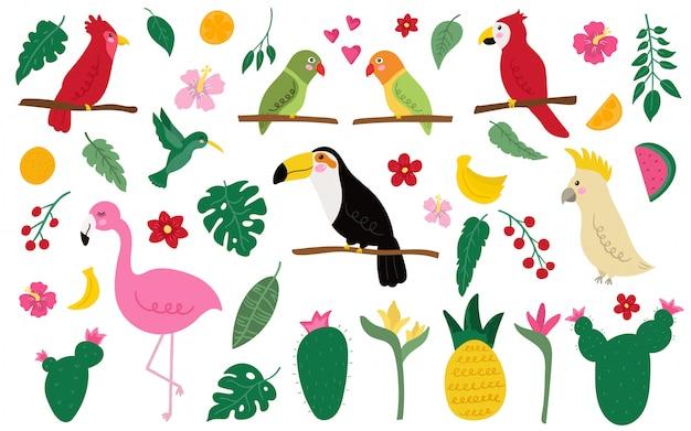 Conjunto de pássaros exóticos e elementos. Vetor Premium