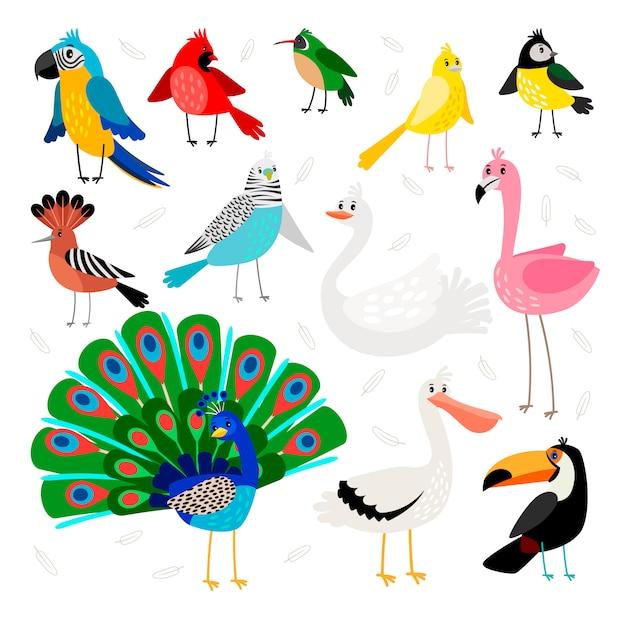 Conjunto de pássaros tropicais e exóticos Vetor Premium