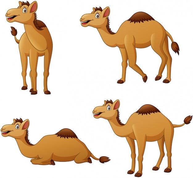 Conjunto de personagem de desenho animado camelo. ilustração Vetor Premium