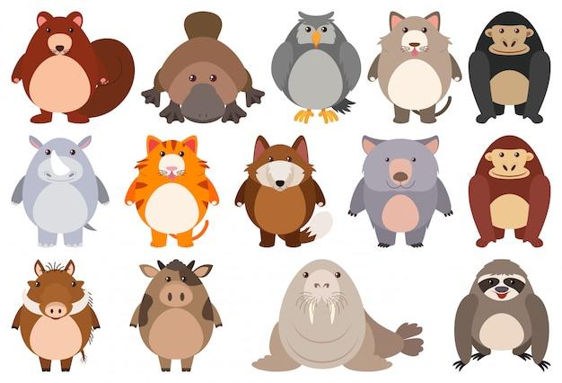 Conjunto de personagem de desenho animado Vetor grátis
