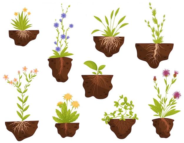Conjunto de plantas com raízes no chão. ilustração. Vetor Premium