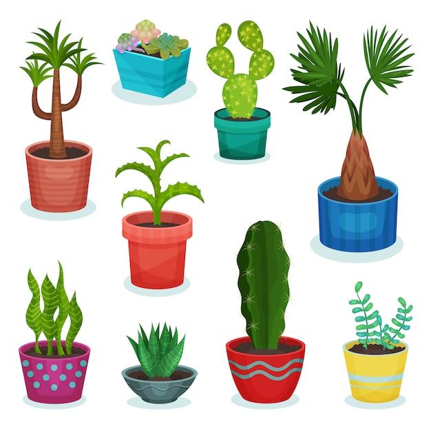 Conjunto de plantas da casa perene no vaso de flores, elemento para ilustrações de interiores para casa de decoração em um background branco Vetor Premium