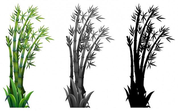 Conjunto de plantas de bambu Vetor grátis
