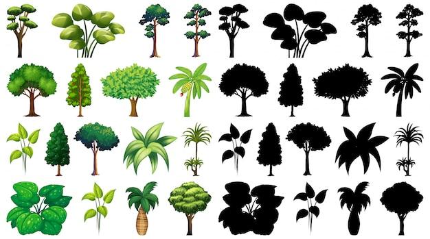 Conjunto de plantas e árvores com sua silhueta Vetor grátis