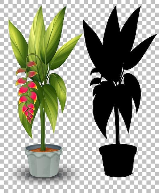 Conjunto de plantas em vaso em transparente Vetor grátis