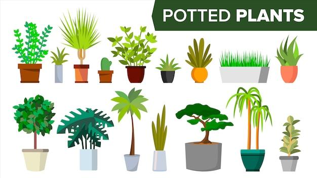 Conjunto de plantas em vasos Vetor Premium