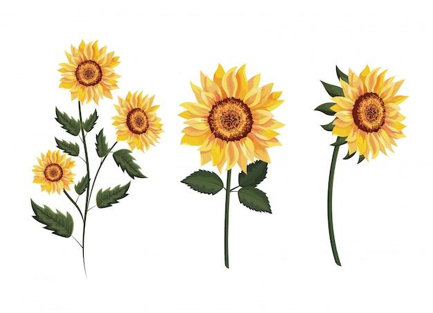 Conjunto de plantas exóticas de girassóis com folhas Vetor Premium
