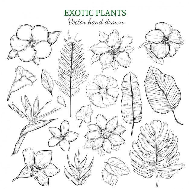 Conjunto de plantas exóticas desenhadas à mão Vetor grátis