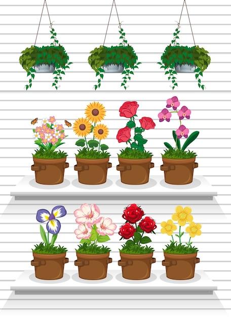 Conjunto de plantas nas prateleiras Vetor Premium