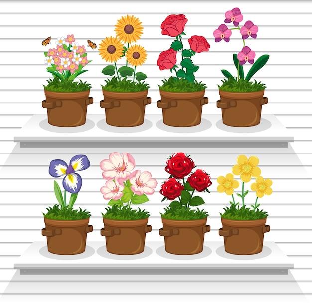 Conjunto de plantas nas prateleiras Vetor grátis