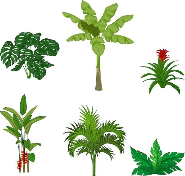 Conjunto de plantas tropicais Vetor Premium