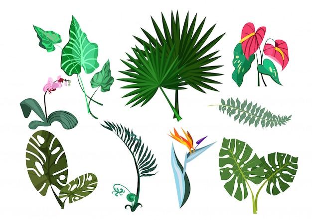Conjunto de plantas verdes ilustração Vetor grátis