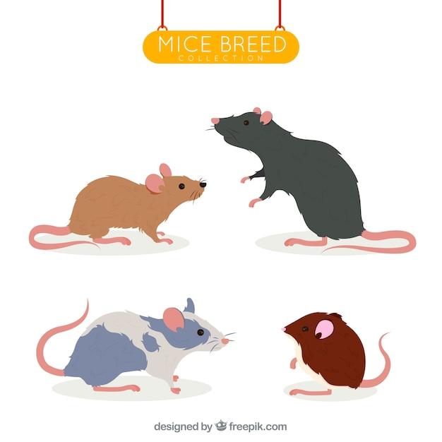 Conjunto de quatro raças de ratos Vetor grátis