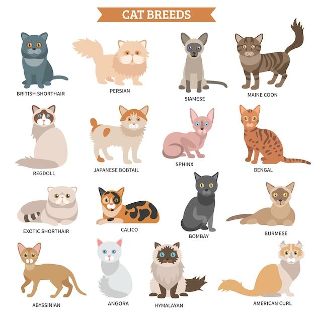 Conjunto de raça de gato Vetor grátis