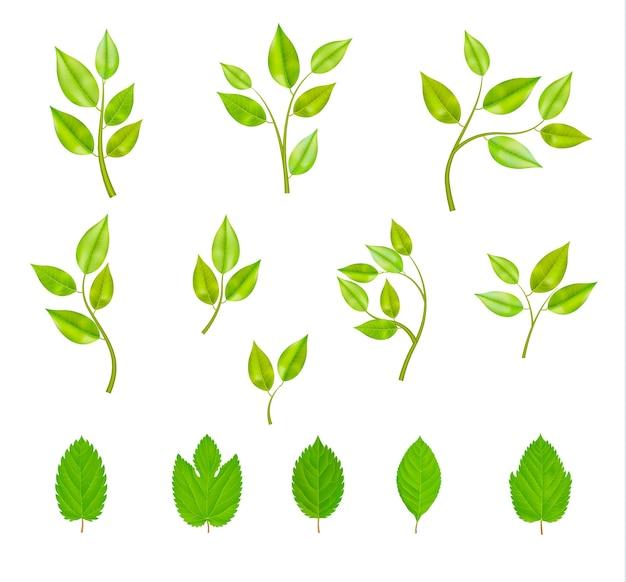 Conjunto de ramos com folhas isoladas Vetor grátis
