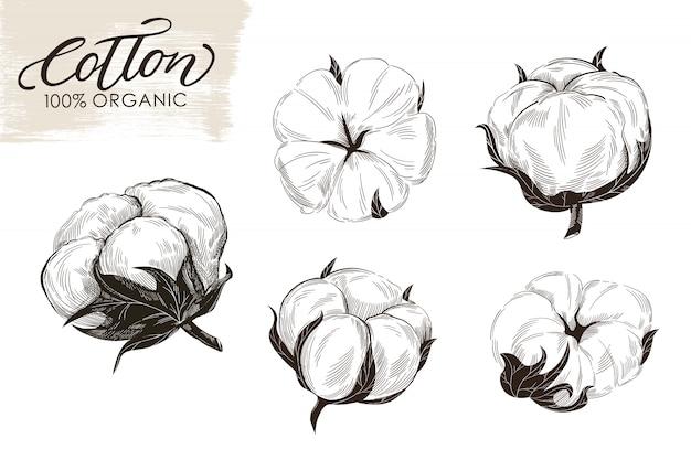 Conjunto de ramos de algodão mão ilustrações desenhadas. Vetor Premium