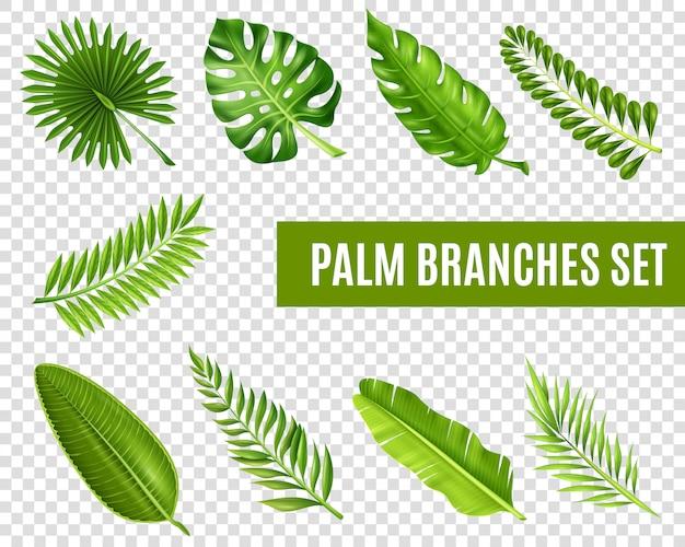 Conjunto de ramos de árvore de palma Vetor grátis