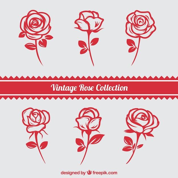 Conjunto de rosas desenhadas à mão Vetor grátis