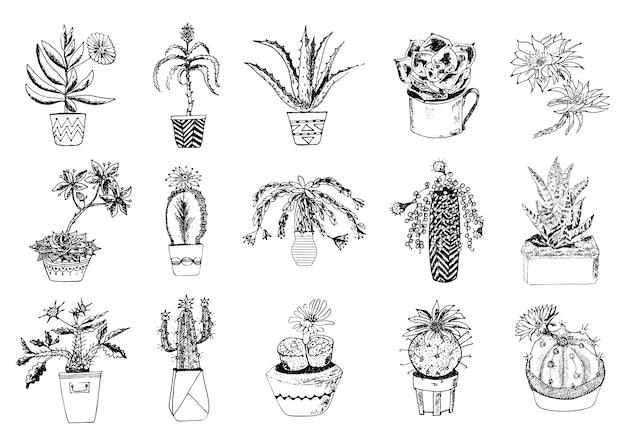 Conjunto de suculentas, cacto, peiote, echeveria, haworthia, aloe vera. plantas decorativas verdes na xícara de chá e vasos. folhas botânicas florais gravadas. desenhado à mão. arbustos e galhos de coleta. Vetor Premium