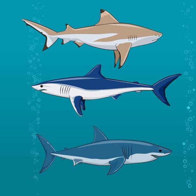 Conjunto de tubarões comuns ilustração vetorial Vetor Premium