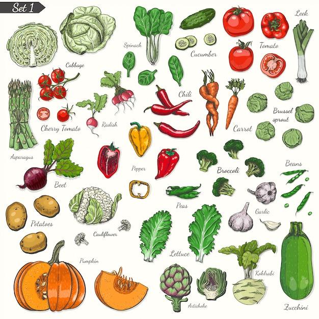 Conjunto de vegetais no estilo de desenho Vetor Premium