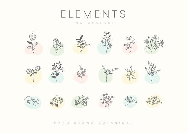Conjunto de vetor de elementos botânicos mão desenhada Vetor grátis