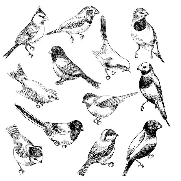 Conjunto de vetores de mão desenhada de pássaros em stile de esboço Vetor Premium
