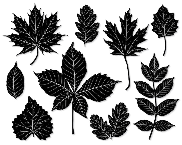 Conjunto de vetores de silhueta de folhas Vetor Premium