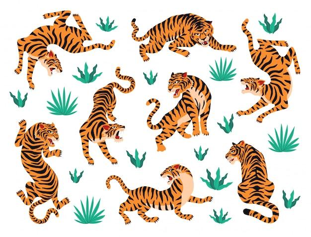 Conjunto de vetores de tigres e folhas tropicais. Vetor Premium