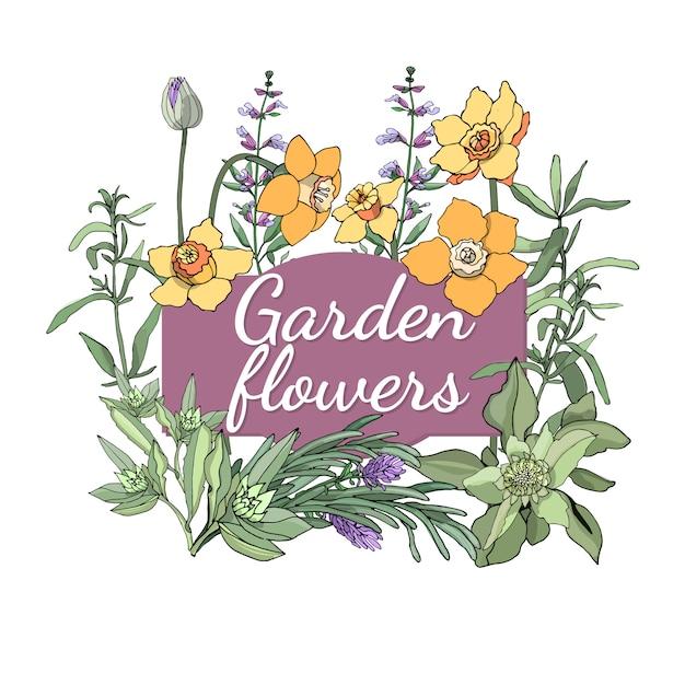 Conjunto floral. o verão e a mola isolaram flores e ervas do jardim com sábio, alfazema, estragão, cebolinha, narciso. Vetor Premium