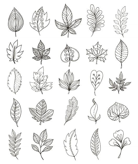 Conjunto monocromático de folhagem desenhada de mão Vetor grátis